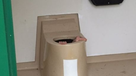 toilet bowl 1